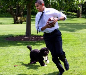 President Obama with Bo, the rescue Portuguese water dog